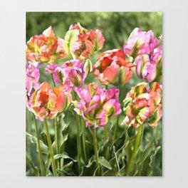 parrot tulips Canvas Print
