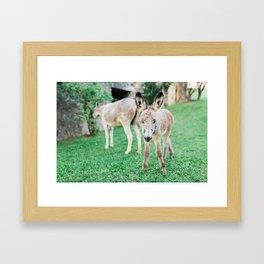Baby Donkey Framed Art Print