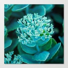 Flower Buds - I Canvas Print