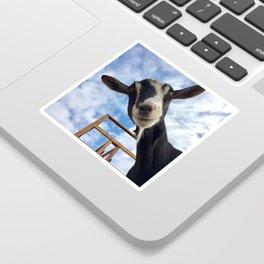 Stella the Goat Sticker