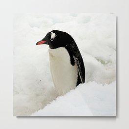 Gentoo Penguin in the Snow Metal Print