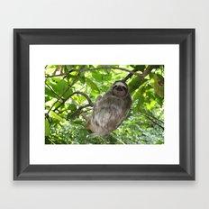 Sloths in Nature Framed Art Print