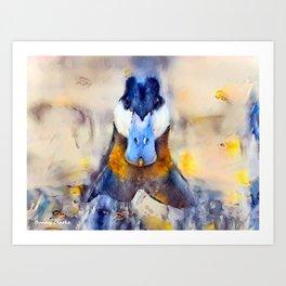 Mr. Ruddy Duck Art Print