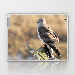 Sunlit Profile of a Northern Harrier Hawk on Driftwood Laptop & iPad Skin