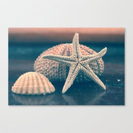 seashells 4 Canvas Print