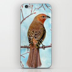 Hepatic Tanager iPhone & iPod Skin