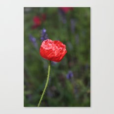 Crinkled Poppy Canvas Print