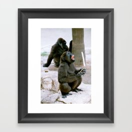 Gorilla laughing Framed Art Print