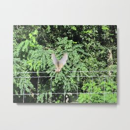 Mourning Dove on Takeoff Metal Print
