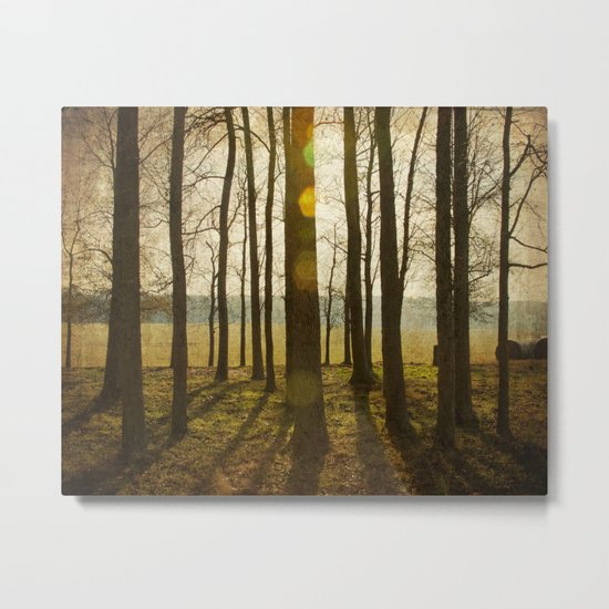 Afternoon Sunlight with Lens Flare Metal Print