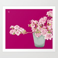 Heavenly Blossom on Pink Art Print