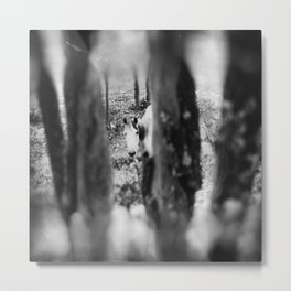 Mountain horse through the woods. Metal Print