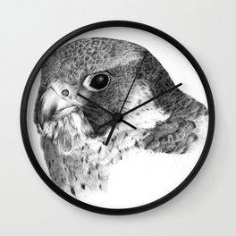 Falco peregrinus Wall Clock