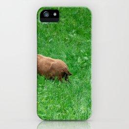 Sheep 2 iPhone Case