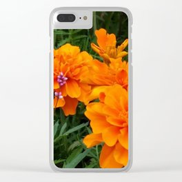 Marigolds with a touch of pink Clear iPhone Case