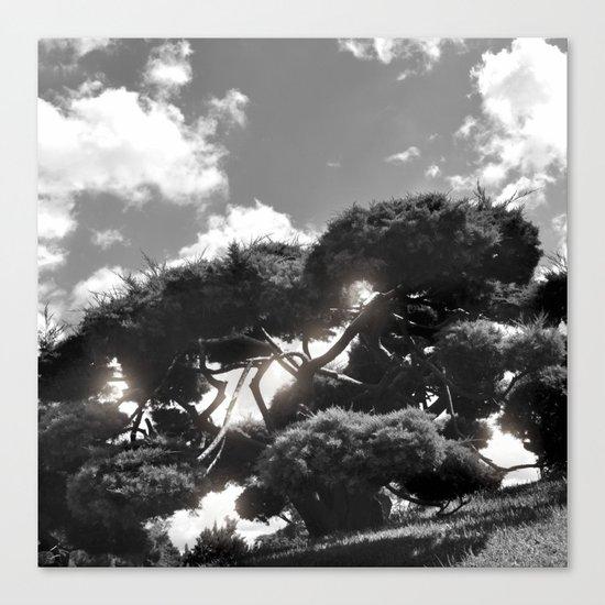 B&W Tree Canvas Print