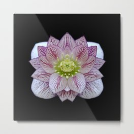 Hellebore Flower Symmetry Metal Print