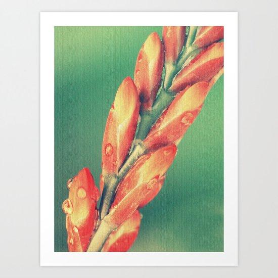 Orange Crosmosia Flowers Art Print