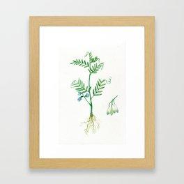 Lentil Framed Art Print