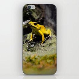 Golden Dart Frog iPhone Skin