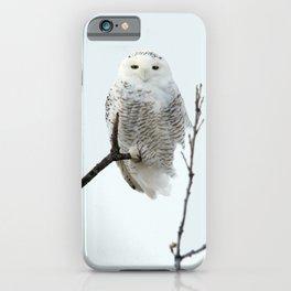 Snowy in the Wind (Snowy Owl) iPhone Case