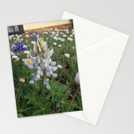 Spring in Texas Stationery Cards