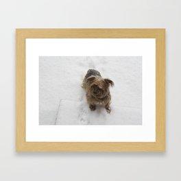 Snowy dog Framed Art Print