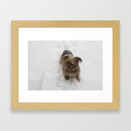 Snowy dog Framed Art Print