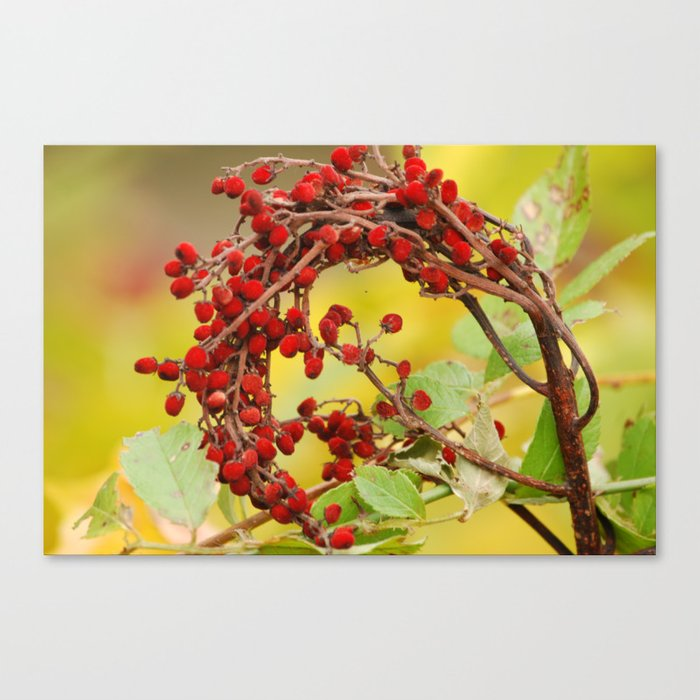 Autumn Berry Canvas Print