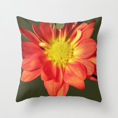 Pretty holiday orange daisy flower. Floral nature garden photography. Throw Pillow