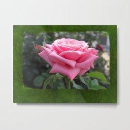 Pink Roses in Anzures 6 Blank P1F0 Metal Print