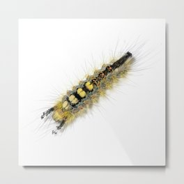 Rusty Tussock Moth Caterpillar Metal Print