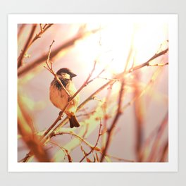 Morning sparrow Art Print