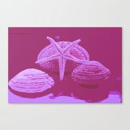 seashell 4 Canvas Print