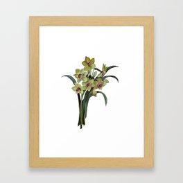 Lent Lily Isolated Framed Art Print