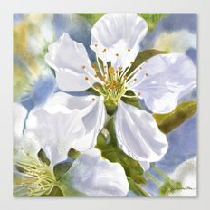 Time To Blossom Canvas Print