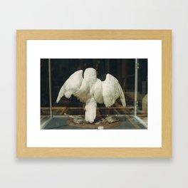 Natural History Museum, Oxford Framed Art Print