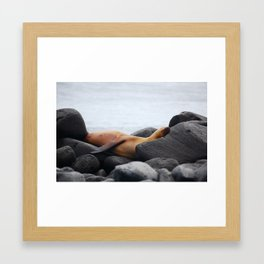 Galapagos Sea Lion Framed Art Print