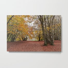 Autumn in the woods of Canfaito park, Italy Metal Print