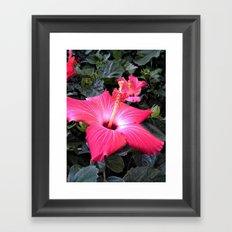 Hibiscus Life Framed Art Print