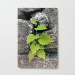Little plant Metal Print