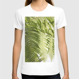 House Plant Fern Leaf Silhouette Sunlight Zen Photo T-shirt