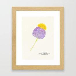 Botanical Sketches 3: East Indies Aster Framed Art Print