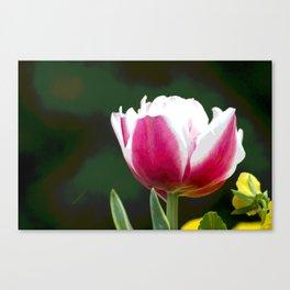 Blushing Canvas Print