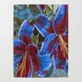Wild Lilies Poster