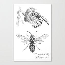 European Wasp, Vespula germanica  Canvas Print