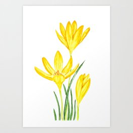 yellow botanical crocus watercolor Art Print