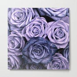 PURPLE ROSES floral flowers violet Metal Print