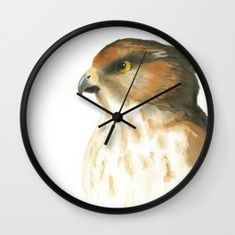 juvenile red-tailed hawk Wall Clock