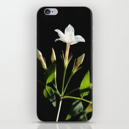 Close Up Of Jasminum Officinale iPhone Skin